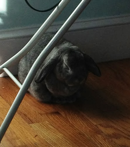 My rabbit rests like it's his job.